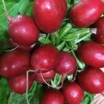 Local Seasonal produce